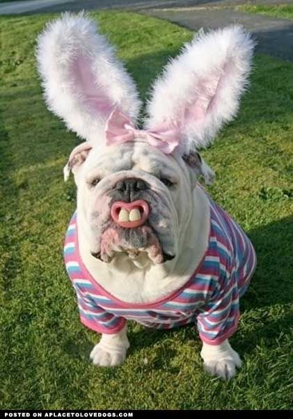 funny photos easter dogs chris cannon