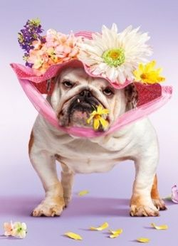 Funny Photos: Easter Dogs - Chris Cannon