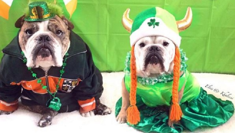 Image result for saint patricks day dogs